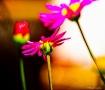 TINY FLOWERS IN S...