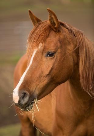 Profiles in Equine