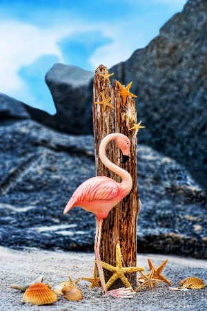 Flamingo on beach
