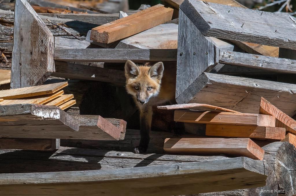 Wood Pile Kit - ID: 15620422 © Annie Katz