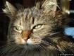 Gato Has a Bad-Ha...