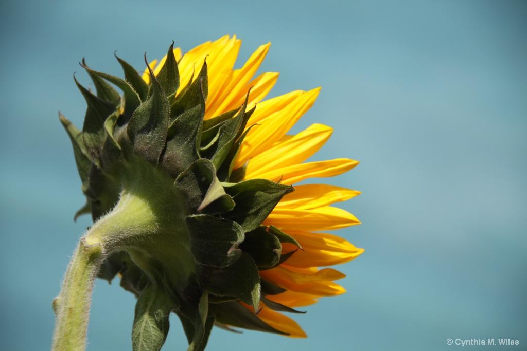 Follow the Sun - ID: 15626426 © Cynthia M. Wiles