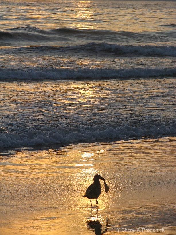 Seagull.JPG - ID: 15628153 © Cheryl A. Pronchick
