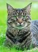 My cat Ravi