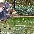 2Walking on Water - ID: 15630121 © Zelia F. Frick