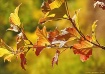 Autumn Colors in ...