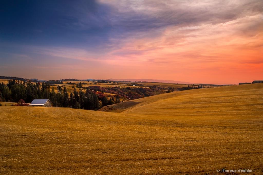 Autumn Gold - ID: 15633013 © Theresa Beehler