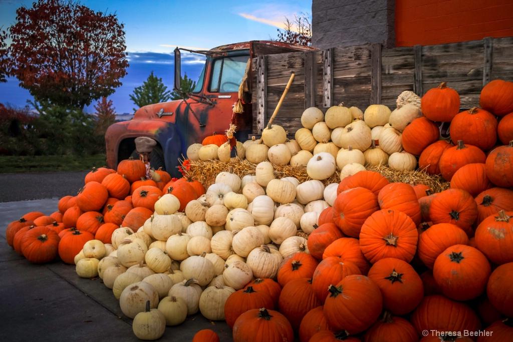 Abundant Overflowing Pumpkins - no spice - ID: 15636035 © Theresa Beehler