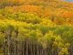 Autumn Canopy