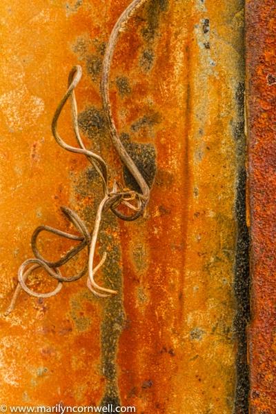 Grapevine and Rust - I - ID: 15640603 © Marilyn Cornwell