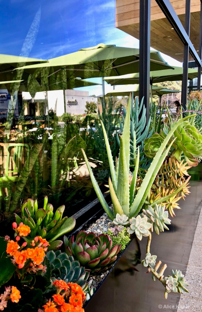 Greenhouse? Where do we Eat? - ID: 15649928 © Alice Kozar