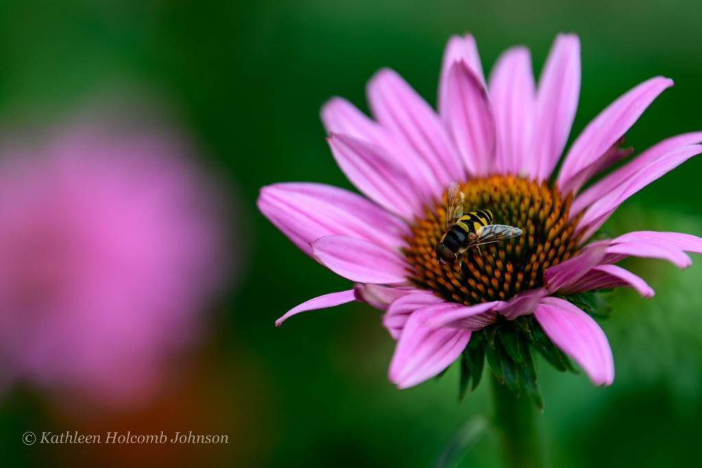 Nature's Partners! - ID: 15650203 © Kathleen Holcomb Johnson