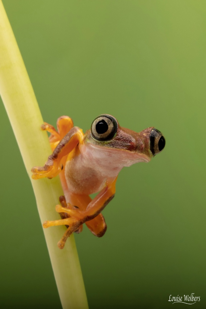 Ready To Leap - ID: 15653065 © Louise Wolbers