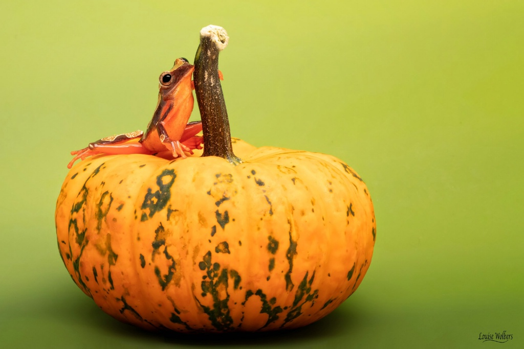 Pumpkin Patch - ID: 15657872 © Louise Wolbers
