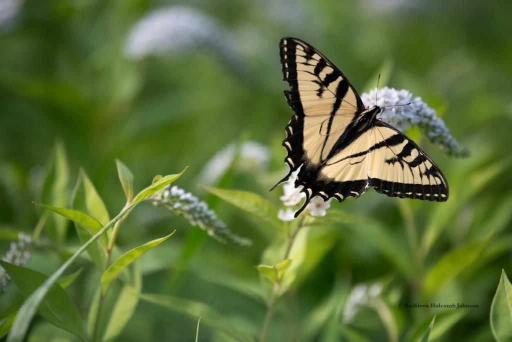 In My Garden! - ID: 15672114 © Kathleen Holcomb Johnson