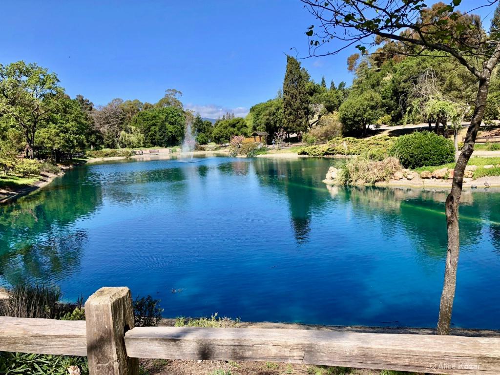 Spring Pond - ID: 15672260 © Alice Kozar
