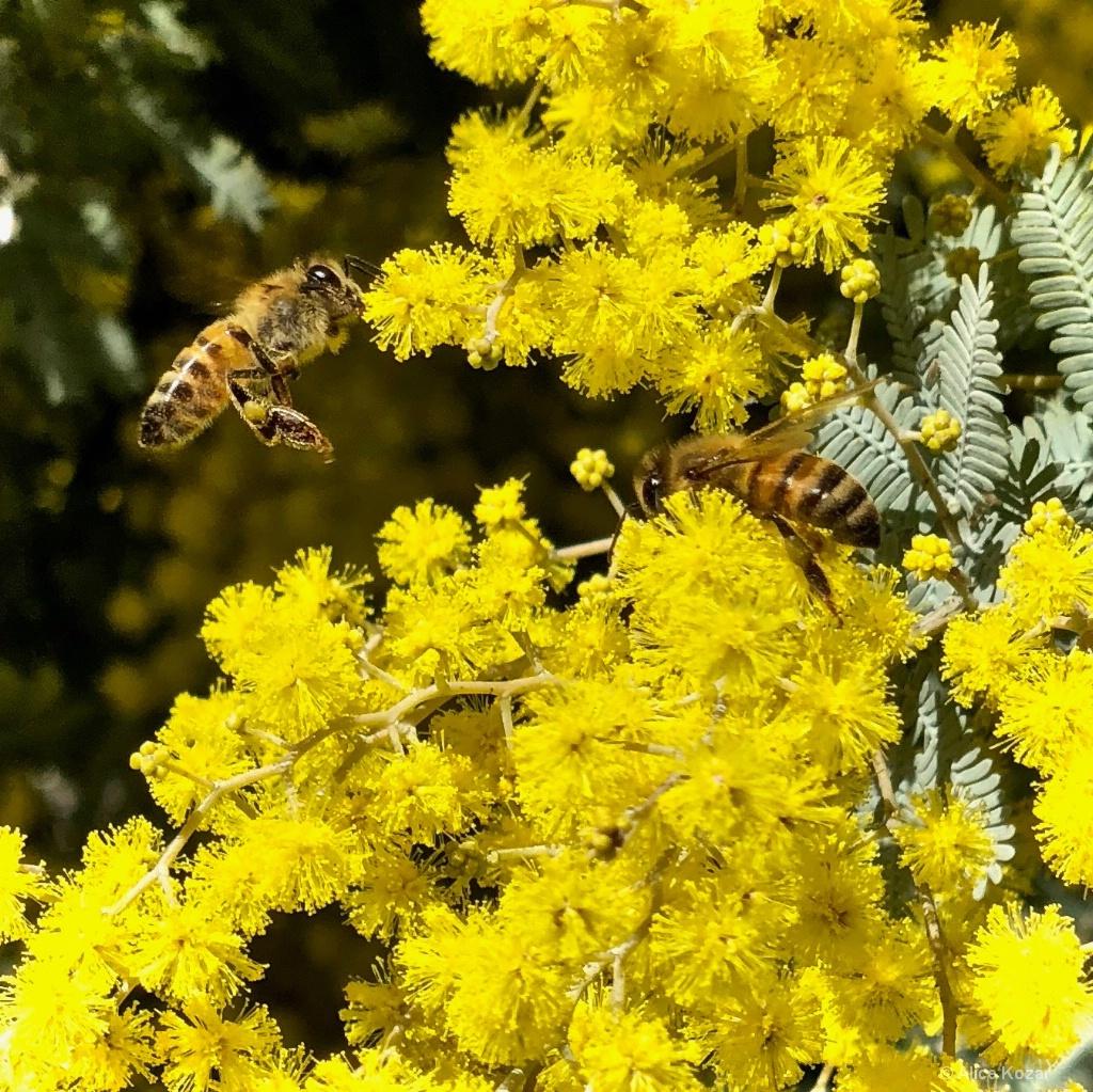 Buzzing Busy Bees - ID: 15672676 © Alice Kozar