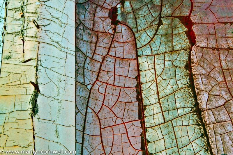 Nature or Nurture - ID: 15679422 © Marilyn Cornwell