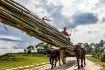 Bamboo carriage