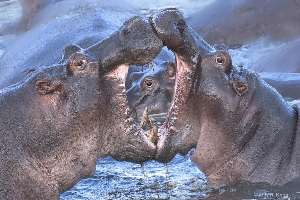 Three Eyes in the Serengeti - ID: 15694903 © Kitty R. Kono