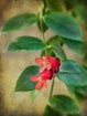 Little Red Flower...