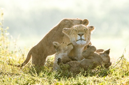 Photography Contest Grand Prize Winner - March 2019: Its Great to be Loved