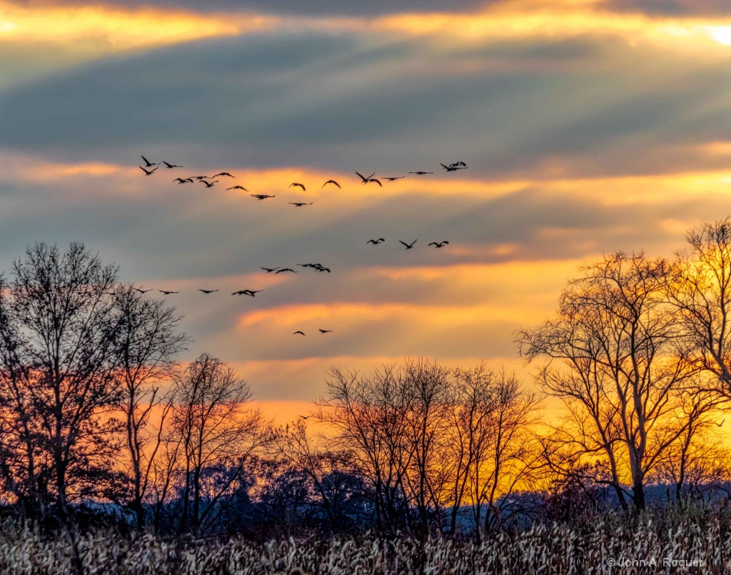 Sandhill Cranes Coming to Roost - ID: 15709534 © John A. Roquet