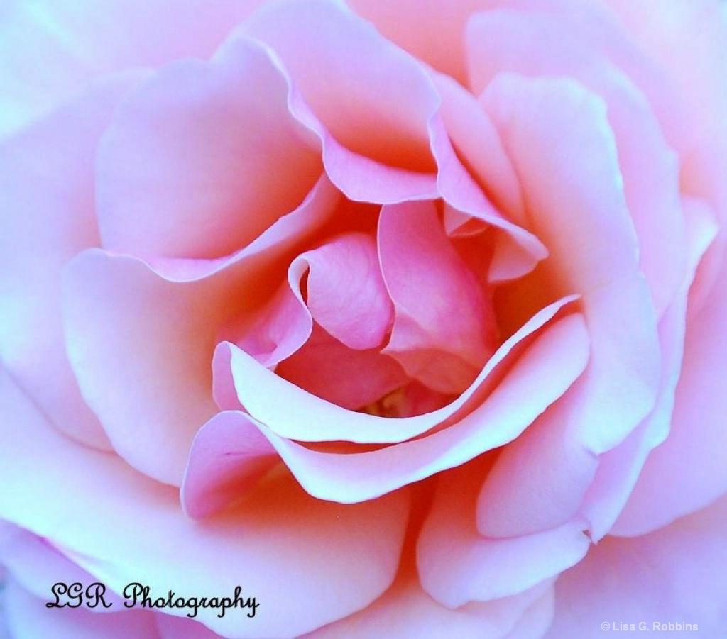 Pink Rose - Bellingrath Gardens Theodore AL