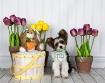 Easter Fun for wa...