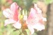 Watercolor Blosso...